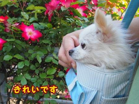 blog7560a.jpg