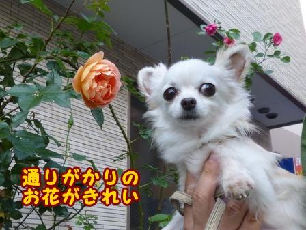 blog7575a.jpg