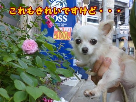 blog7576a.jpg
