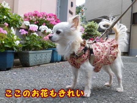 blog7581a.jpg