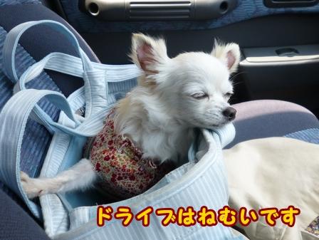 blog7590a.jpg