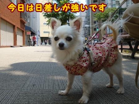 blog7595a.jpg