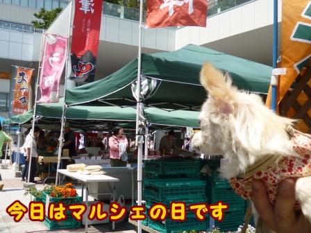 blog7604a.jpg