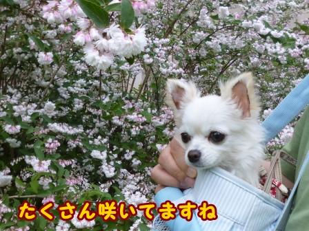 blog7606a.jpg