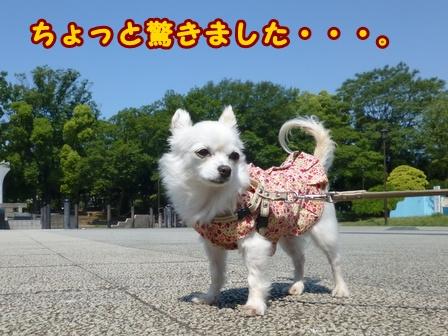 blog7609a.jpg