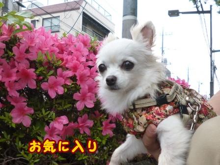 blog7626a.jpg