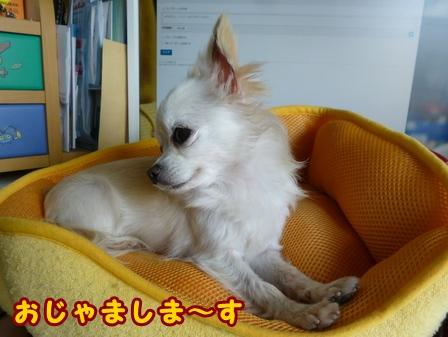 blog7641a.jpg