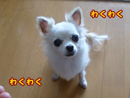 blog7653a.jpg