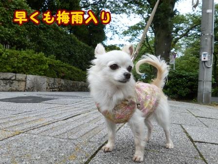 blog7664a.jpg