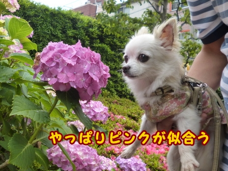 blog7665a.jpg
