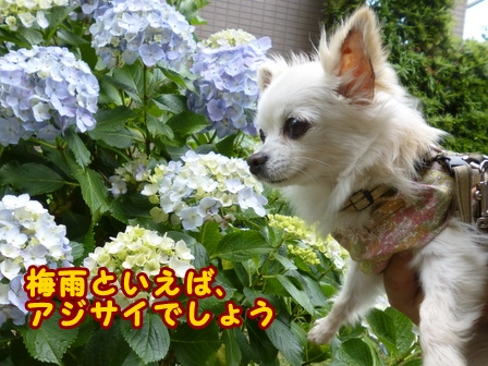 blog7667a.jpg