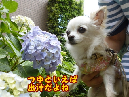 blog7668a.jpg