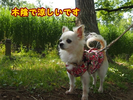 blog7685a.jpg