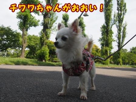 blog7688a.jpg