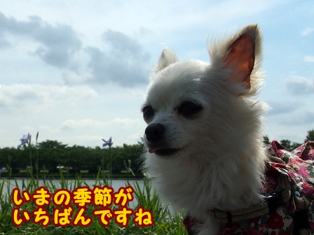 blog7691a.jpg