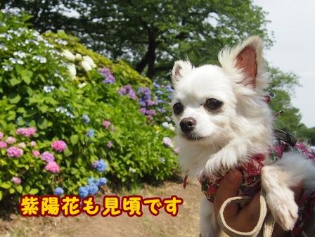 blog7695a.jpg