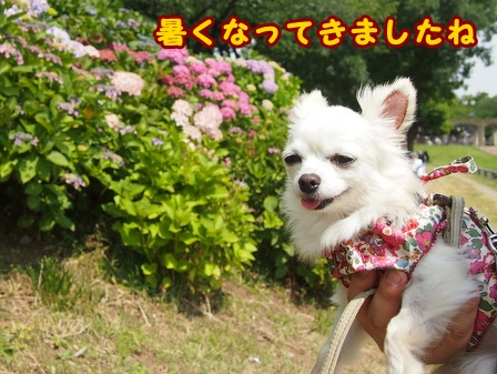 blog7699a.jpg