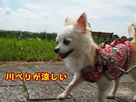 blog7700a.jpg