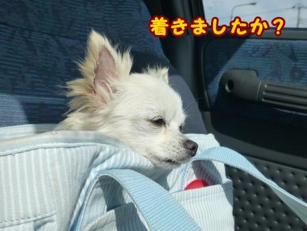 blog7721a.jpg