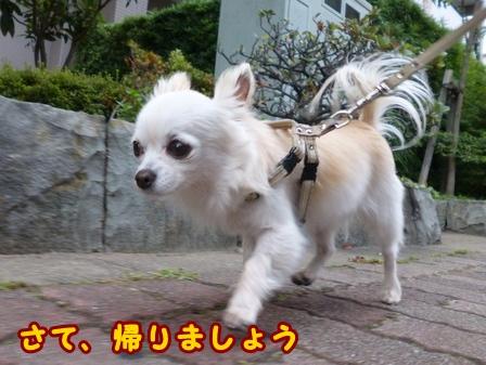 blog7731a.jpg