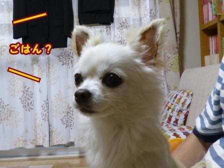 blog7734a.jpg