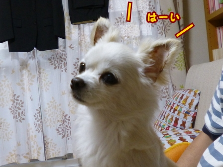 blog7735a.jpg