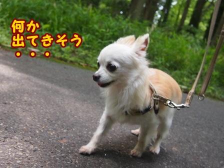 blog7754a.jpg