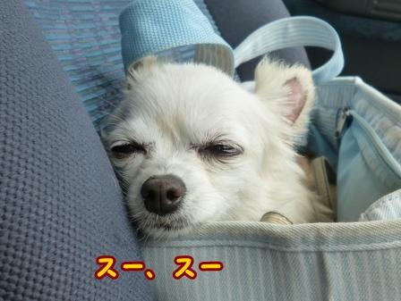blog7776a.jpg
