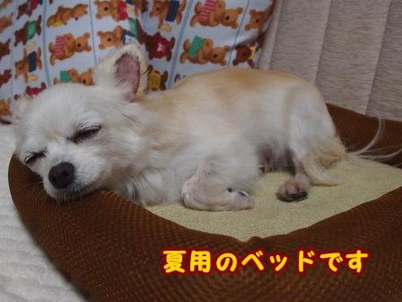 blog7803a.jpg