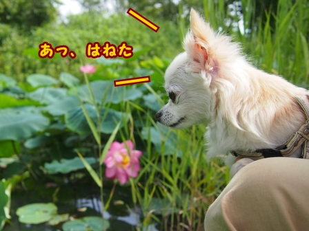 blog7815a.jpg