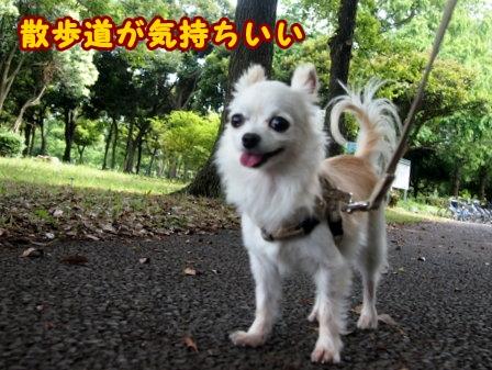 blog7821a.jpg
