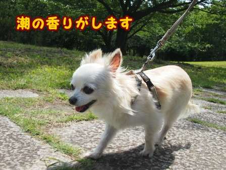 blog7888a.jpg