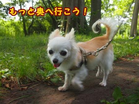 blog7918a.jpg