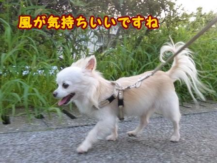 blog7942a.jpg