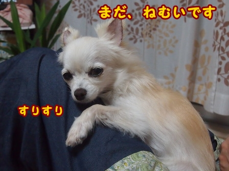 blog8028a.jpg
