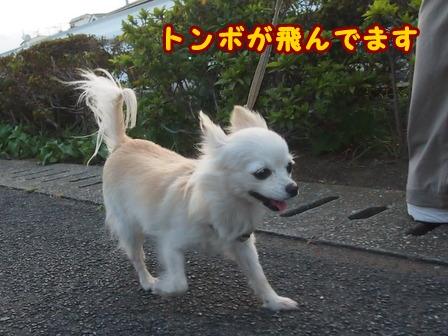 blog8036a.jpg