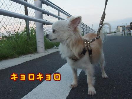 blog8041a.jpg