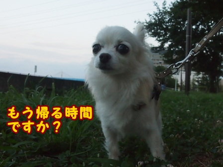 blog8050a.jpg