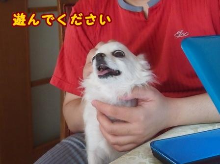 blog8115a.jpg