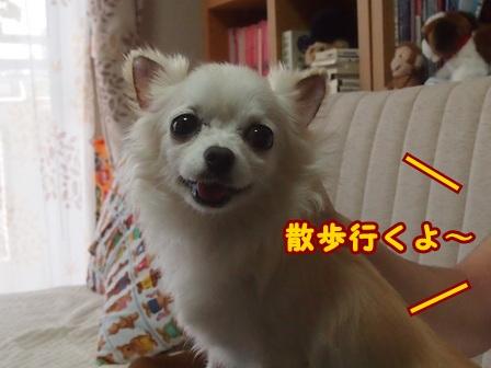 blog8133a.jpg