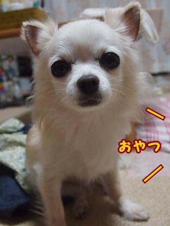 blog8137a.jpg