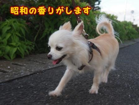 blog8152a.jpg