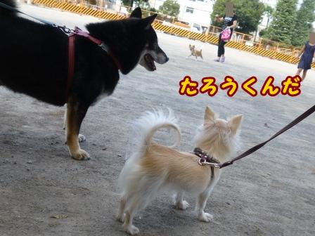 blog8164a.jpg