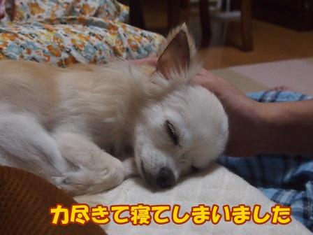 blog8189a.jpg