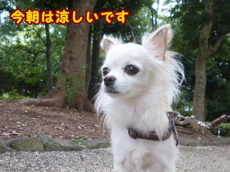 blog8237a.jpg