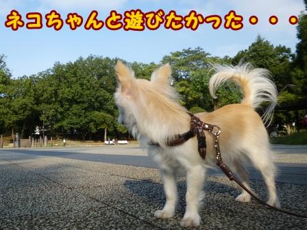 blog8241a.jpg