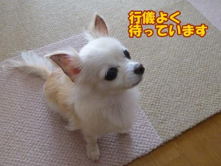 blog8243a.jpg