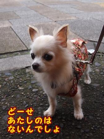 blog8280a.jpg