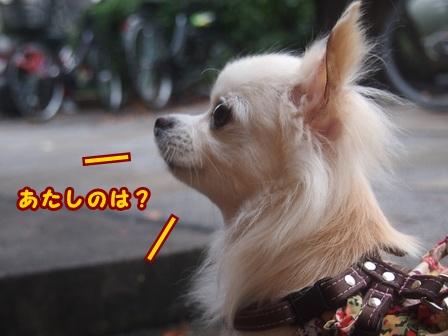 blog8282a.jpg