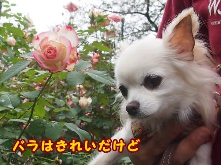 blog8302a.jpg